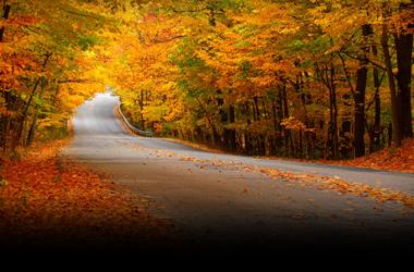 autumn-leaves-fallen-2560x1600